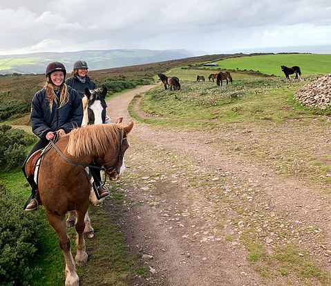 Exmoor Ponies meet our Horses on North H