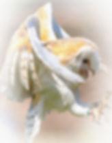 Barn Owl mist.jpg