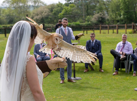 Weddings; Ring Owl!