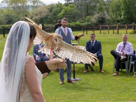 Weddings; Ring Owl!
