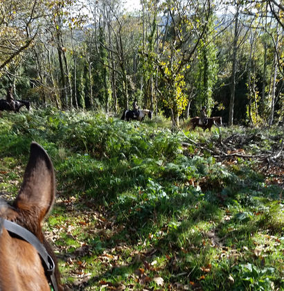 Selworthy Woods Riding