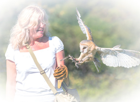 Fly our Owls & Hawks and  Reconnect with the Natural World for Health and Well-being!