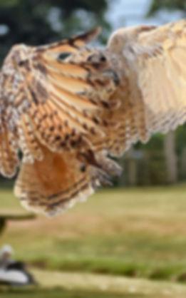 Fly an Owl