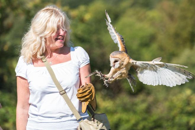 Julie Flying Barn Owl
