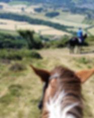 Horse looking view Bossington Beach