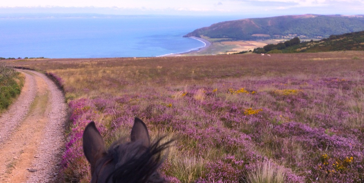 Porlock Hill ride in Heather clad summer