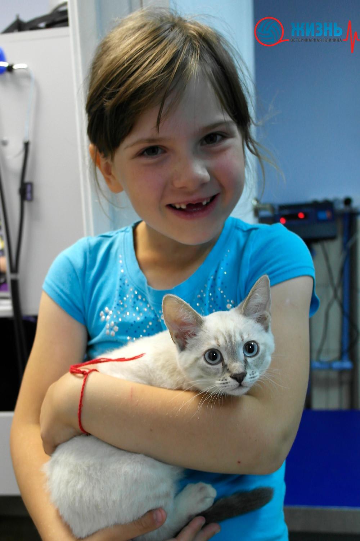 Ветклиника в Калуге, котенок на прививке