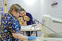 УЗИ диагностика собаки