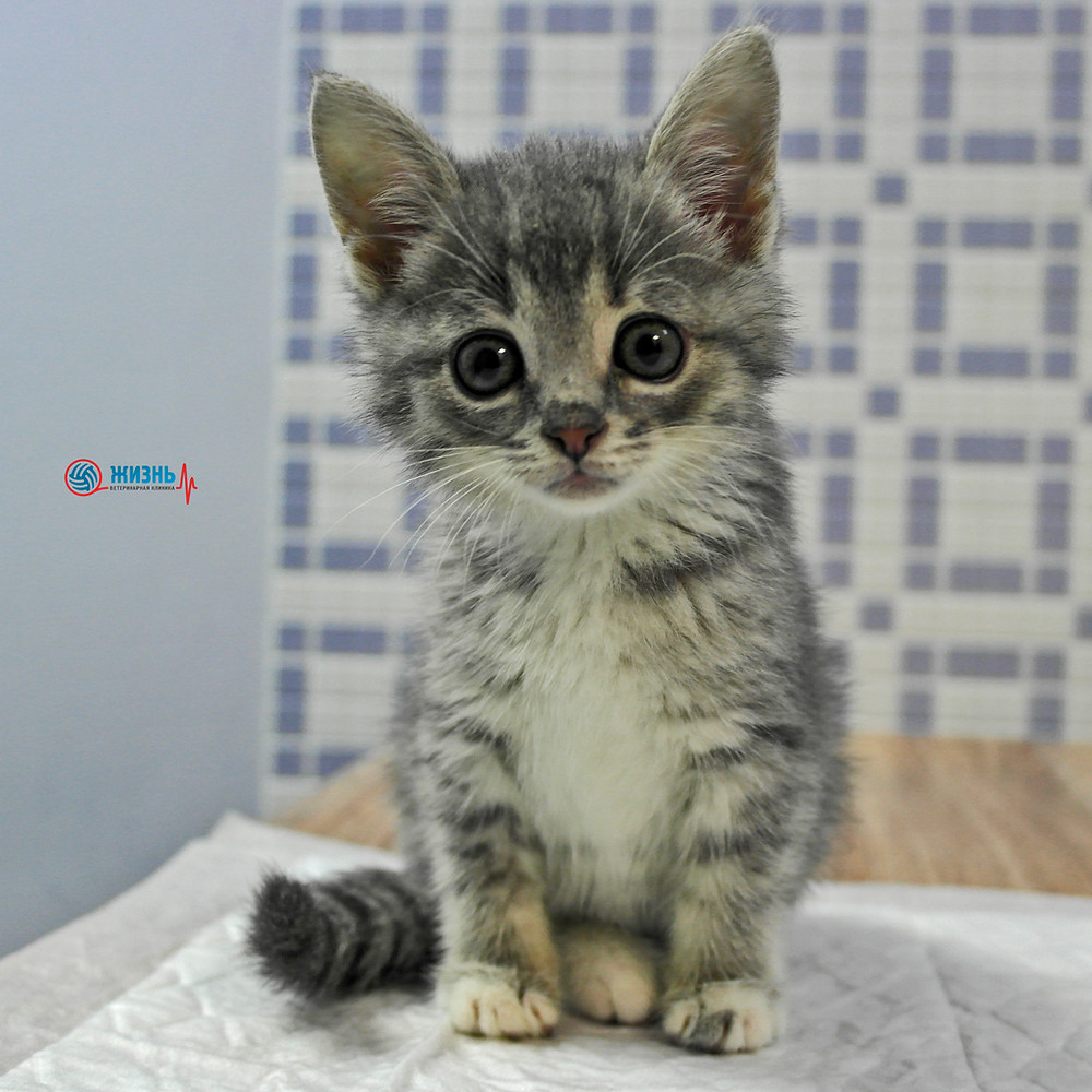Перелом, котенок