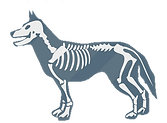 Рентген собак в Калуге