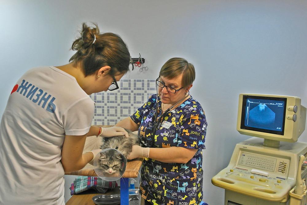 Ветеринарная клиника в калуге УЗИ