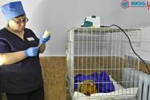 Стационар ветеринарной клиники