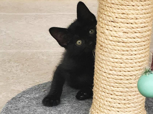 Enxoval do gatinho