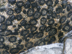 Granito Orbicular