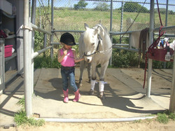 Child grooming a horse