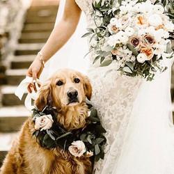 """""""Os cães são o nosso elo com o Paraíso"""