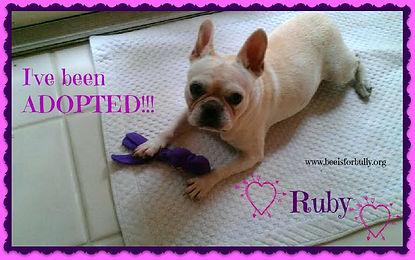 Ruby Adopted.jpg