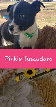 Pinkie 1.JPG