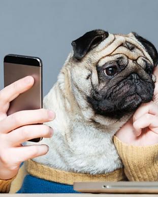 pug phone.png