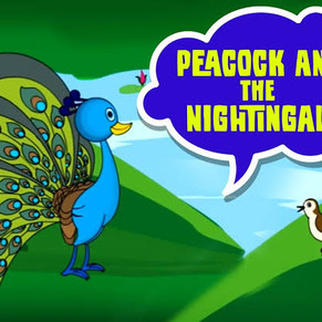 Peacock And The Nightingale