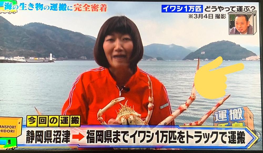 運搬千鳥「静岡県~福岡県の水族館にイワシを1万匹運送する」
