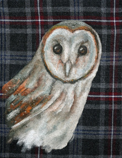 Owl on grey tartan