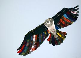Osprey with colours tartan