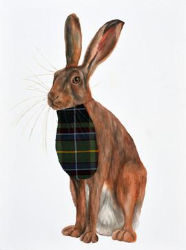 Hare with tartan