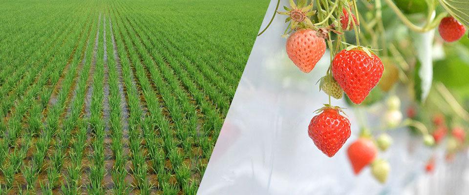 農業資材|吉田農事