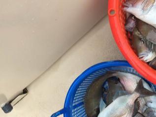 June 15 Fishing Report