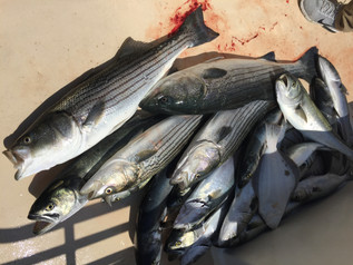 June 10- Fishing Report