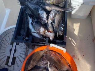 Sept 13 Fishing Report