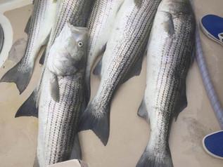 Sept 18 Fishing Report