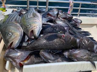 Aug 28 Fishing Report