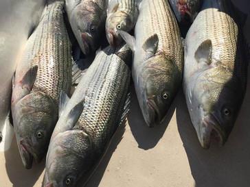 June 29 Fishing Report