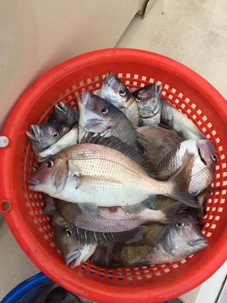 Sept 2 Fishing Report