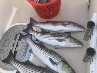 Aug 22 Fishing Report