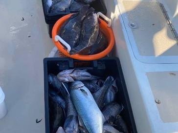 Nov 10 Fishing Report