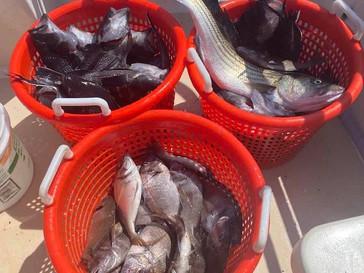 Aug 10 Fishing Report
