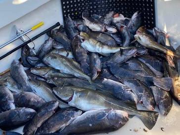 Nov 29 Fishing Report