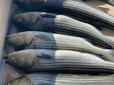 Oct 6 Fishing Report