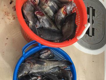 Nov 4 Fishing Report