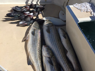 July 16 Fishing Report