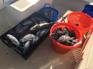 Nov 25 Fishing Report