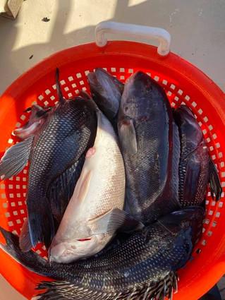 Nov 8 Fishing Report