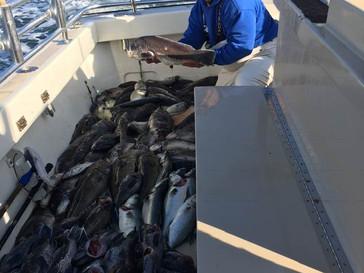 Nov 12 Fishing Report