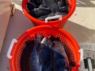Oct 31 Fishing Report