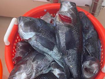 Aug 13 Fishing Report