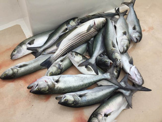 May 26- Fishing Report
