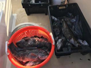 Dec 1 Fishing Report